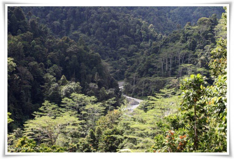 hutan di papua barat
