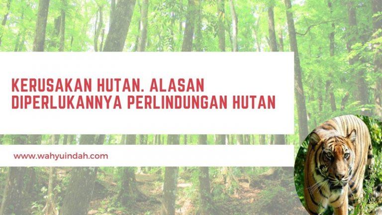 kerusakan hutan menjadi alasan diperlukannya perlindungan hutan lebih mendalam