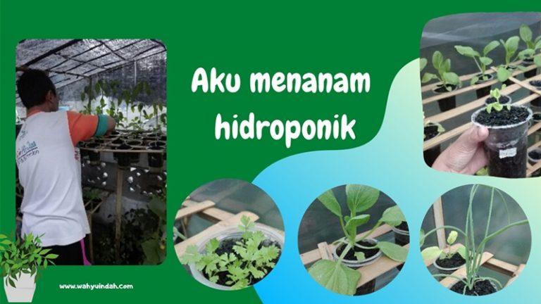 aksi menanam tanaman. saya memilih hidroponik