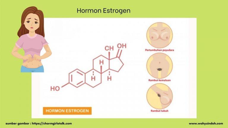 hormon estrogen pada perempuan dan pengertiannya